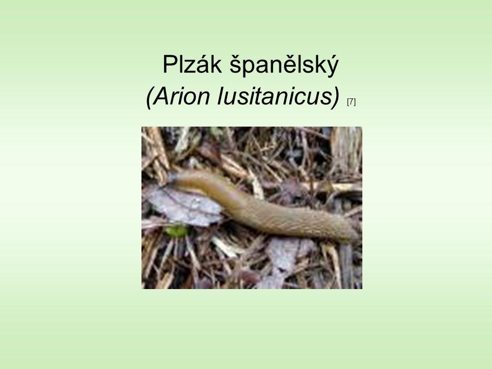 Plzák španělský (Arion lusitanicus) [7]