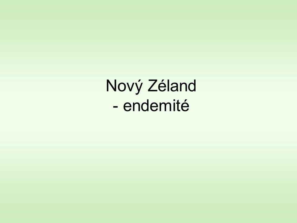 Nový Zéland - endemité