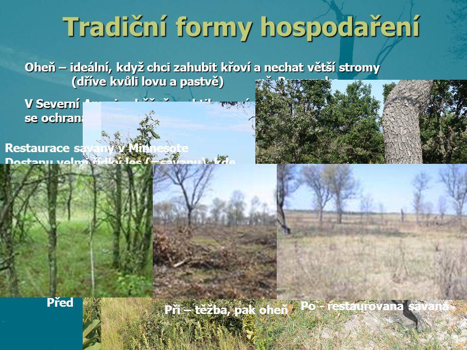 Oheň – ideální, když chci zahubit křoví a nechat větší stromy (dříve kvůli lovu a pastvě)př. Rumunsko V Severní Americe běžně praktikovaný management