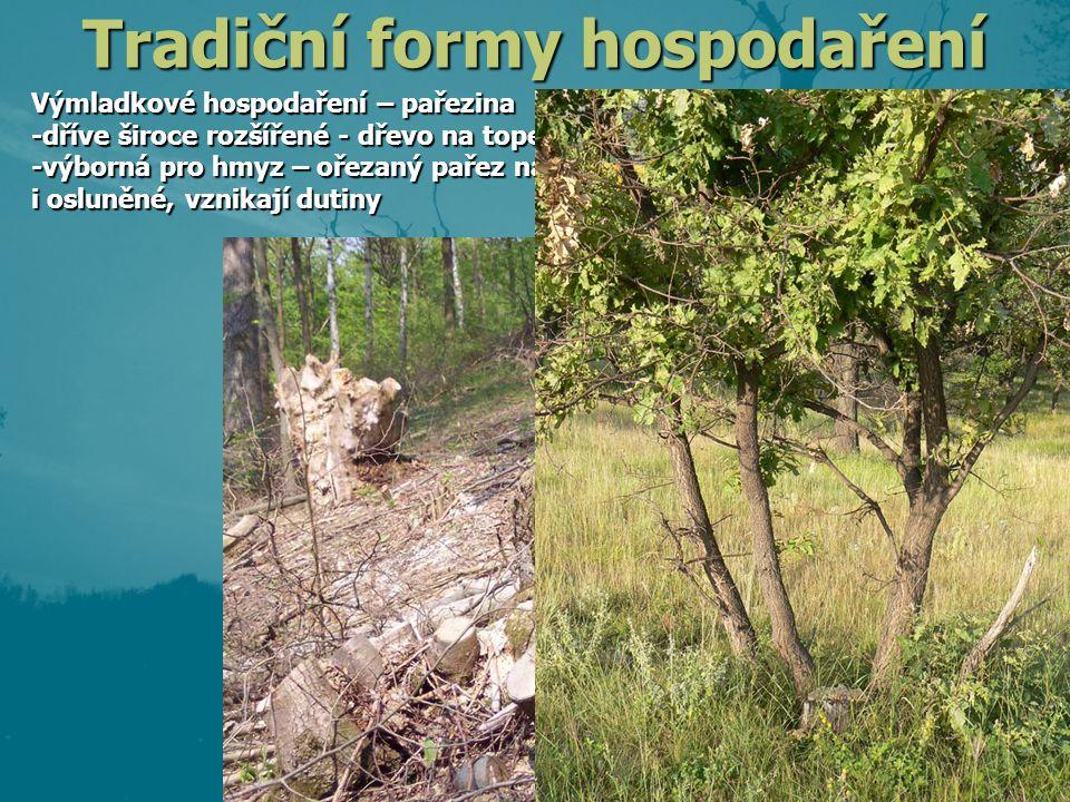 Výmladkové hospodaření – pařezina -dříve široce rozšířené - dřevo na topení -výborná pro hmyz – ořezaný pařez nabízí živé i mrtvé dřevo, i osluněné, v