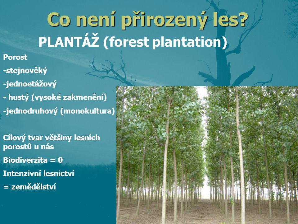 Přirozený vs.nepřirozený les Les nepřirozený – plantáž apod.