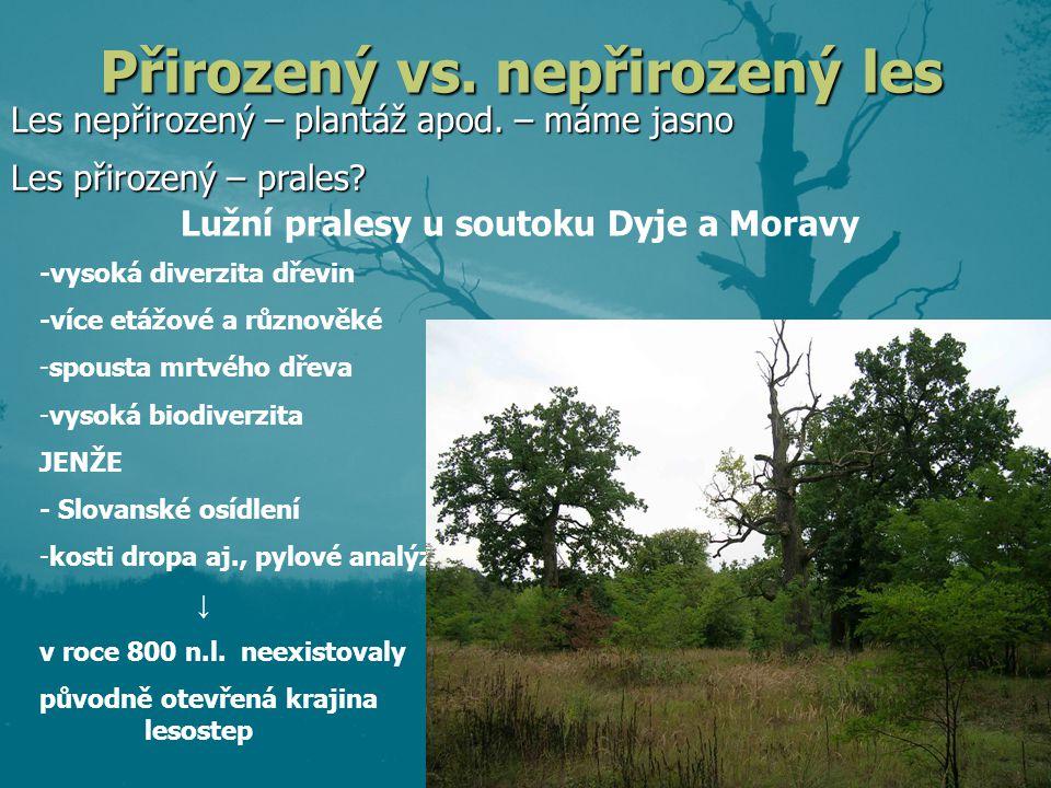 Přirozený vs. nepřirozený les Les nepřirozený – plantáž apod. – máme jasno -vysoká diverzita dřevin -více etážové a různověké -spousta mrtvého dřeva -