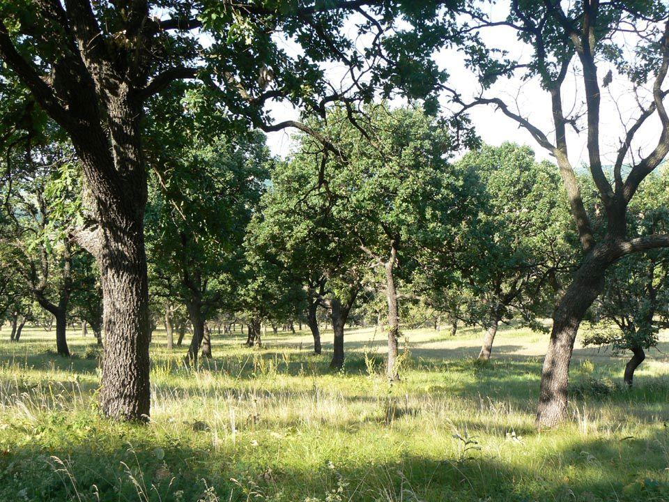 Motýli – hnědásek osikový - okáč jílkový ale i jasoň dymnivkový a desítky dalších druhů potřebují světliny, rozvolněné lesy, ranná sukcesní stadia les