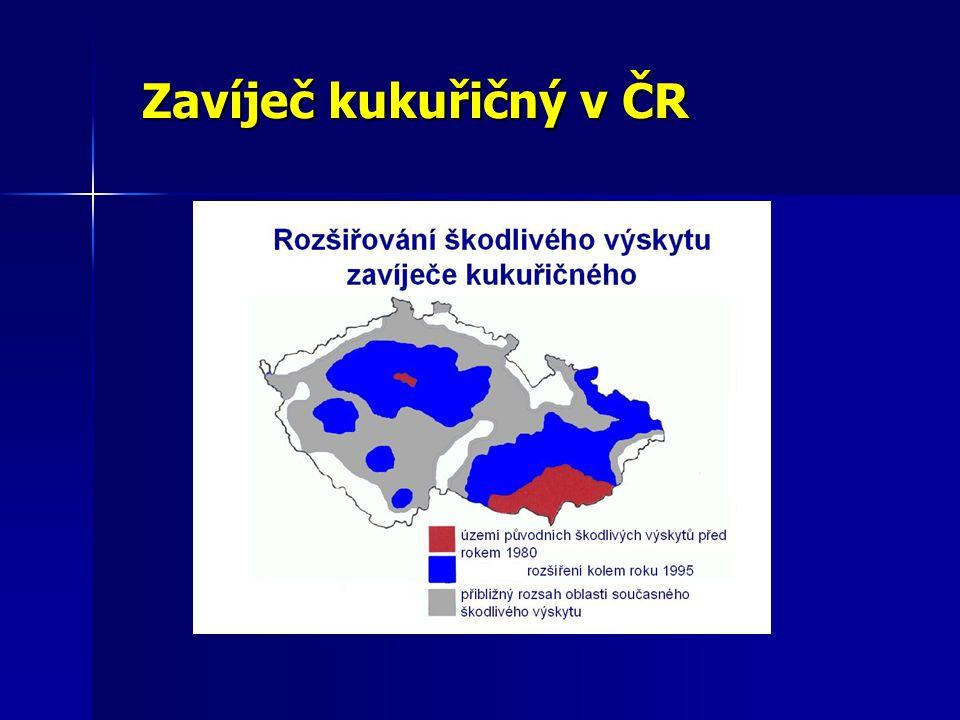 Zavíječ kukuřičný v ČR