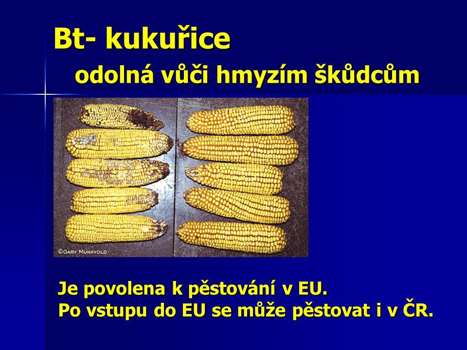 Bt- kukuřice odolná vůči hmyzím škůdcům Bt- kukuřice odolná vůči hmyzím škůdcům Je povolena k pěstování v EU. Po vstupu do EU se může pěstovat i v ČR.