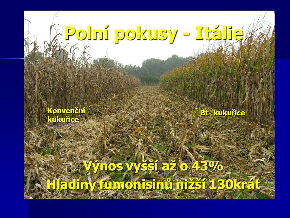 Polní pokusy - Itálie Výnos vyšší až o 43% Hladiny fumonisinů nižší 130krát Bt- kukuřice Konvenčníkukuřice