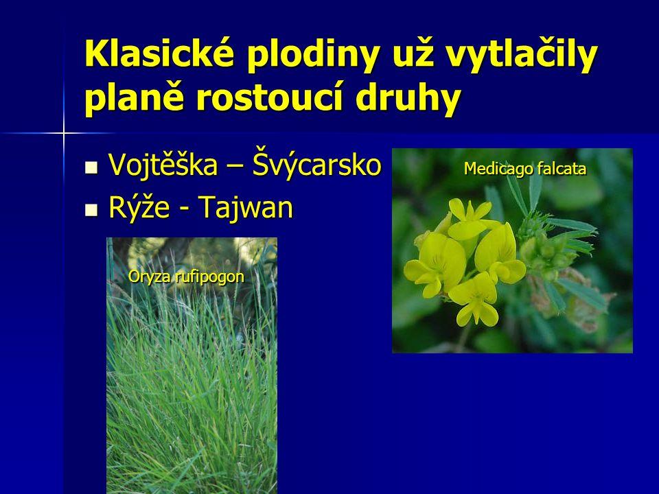 Klasické plodiny už vytlačily planě rostoucí druhy Vojtěška – Švýcarsko Vojtěška – Švýcarsko Rýže - Tajwan Rýže - Tajwan Medicago falcata Oryza rufipogon