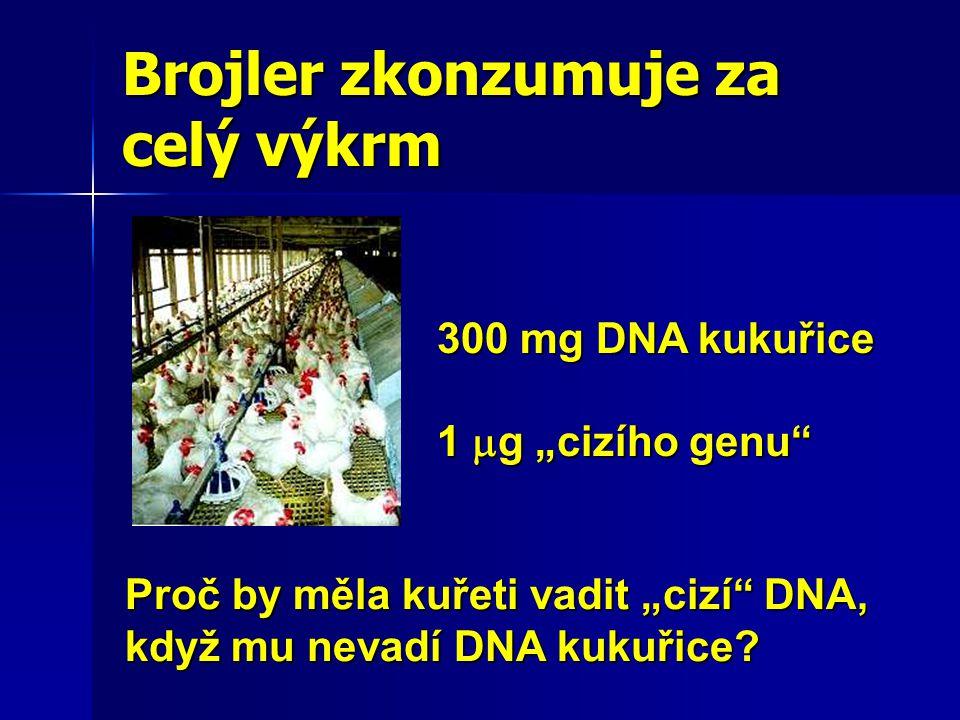 """Brojler zkonzumuje za celý výkrm 300 mg DNA kukuřice 1  g """"cizího genu Proč by měla kuřeti vadit """"cizí DNA, když mu nevadí DNA kukuřice?"""