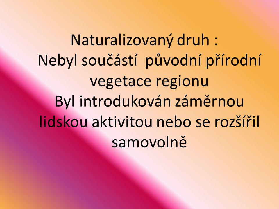 Naturalizovaný druh : Nebyl součástí původní přírodní vegetace regionu Byl introdukován záměrnou lidskou aktivitou nebo se rozšířil samovolně