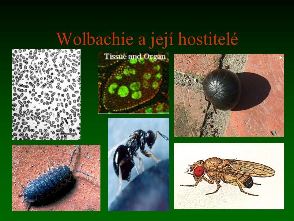 Wolbachie a její hostitelé