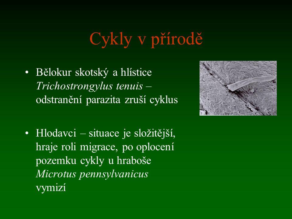 Cykly v přírodě Bělokur skotský a hlístice Trichostrongylus tenuis – odstranění parazita zruší cyklus Hlodavci – situace je složitější, hraje roli mig