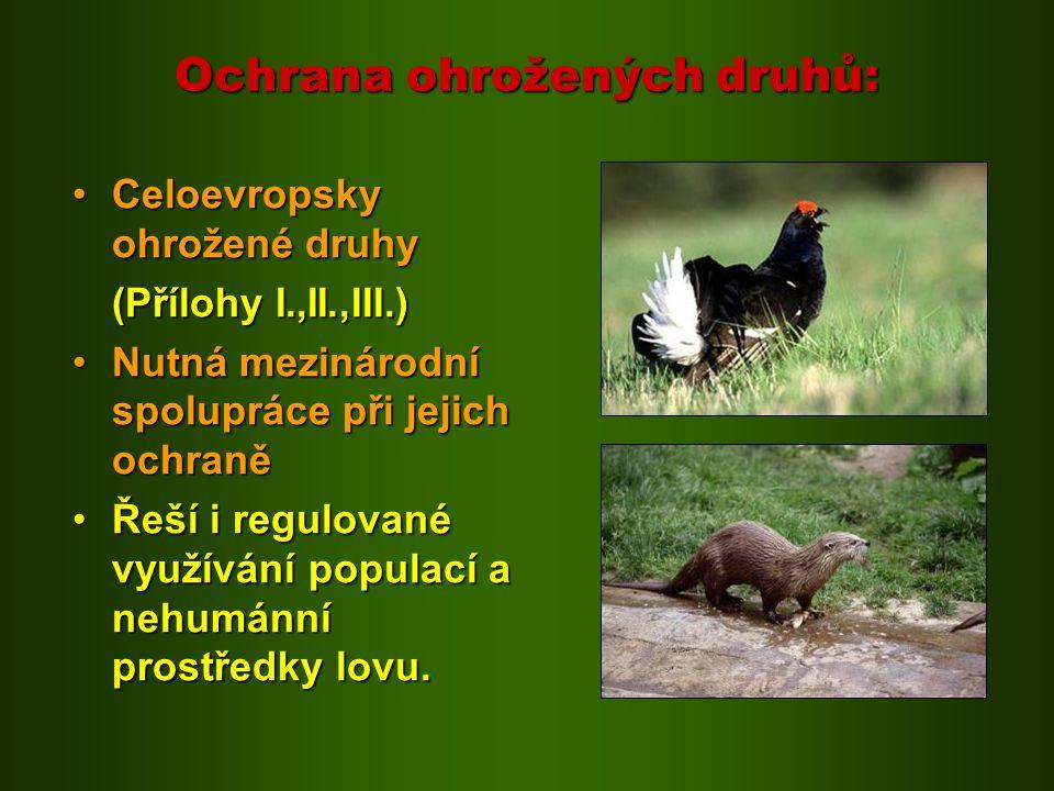 Ochrana ohrožených druhů: Celoevropsky ohrožené druhyCeloevropsky ohrožené druhy (Přílohy I.,II.,III.) Nutná mezinárodní spolupráce při jejich ochraně