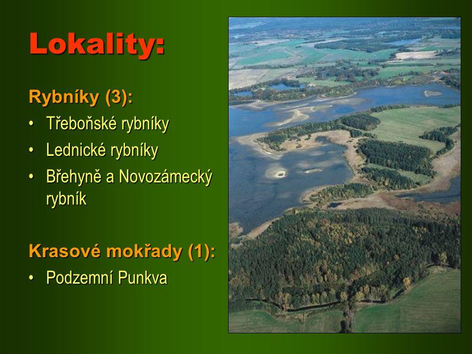 Lokality: Rybníky (3): Třeboňské rybníkyTřeboňské rybníky Lednické rybníkyLednické rybníky Břehyně a Novozámecký rybníkBřehyně a Novozámecký rybník Kr