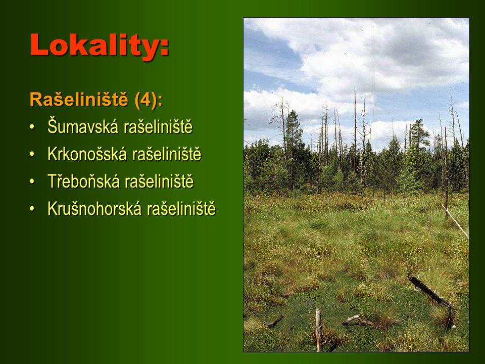 Lokality: Rašeliniště (4): Šumavská rašeliništěŠumavská rašeliniště Krkonošská rašeliništěKrkonošská rašeliniště Třeboňská rašeliništěTřeboňská rašeli