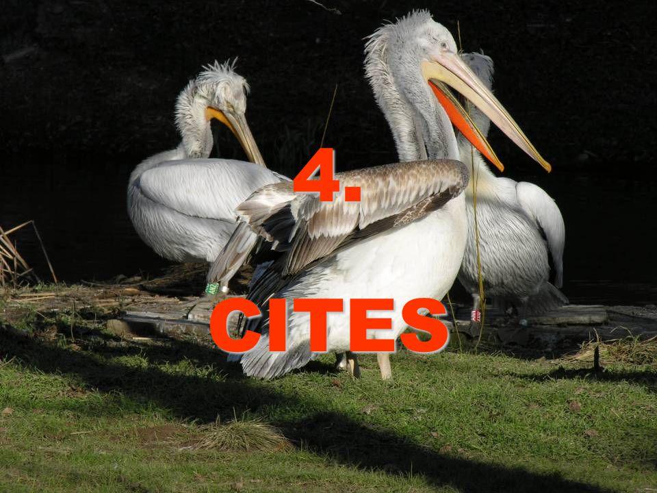 4. CITES