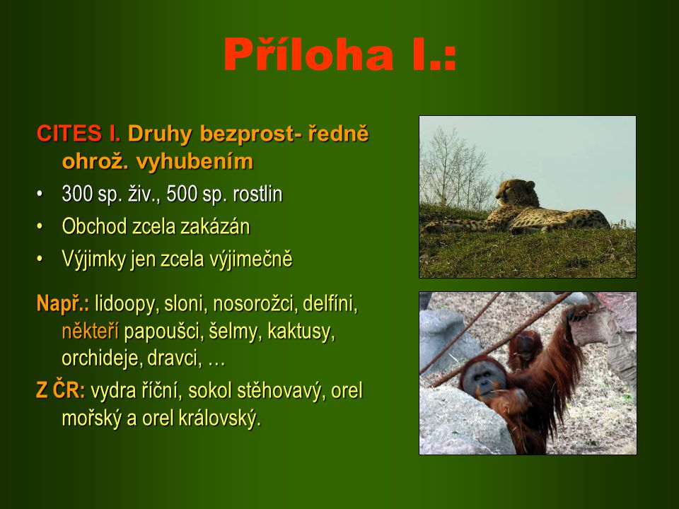 Příloha I.: CITES I. Druhy bezprost- ředně ohrož. vyhubením 300 sp. živ., 500 sp. rostlin300 sp. živ., 500 sp. rostlin Obchod zcela zakázánObchod zcel
