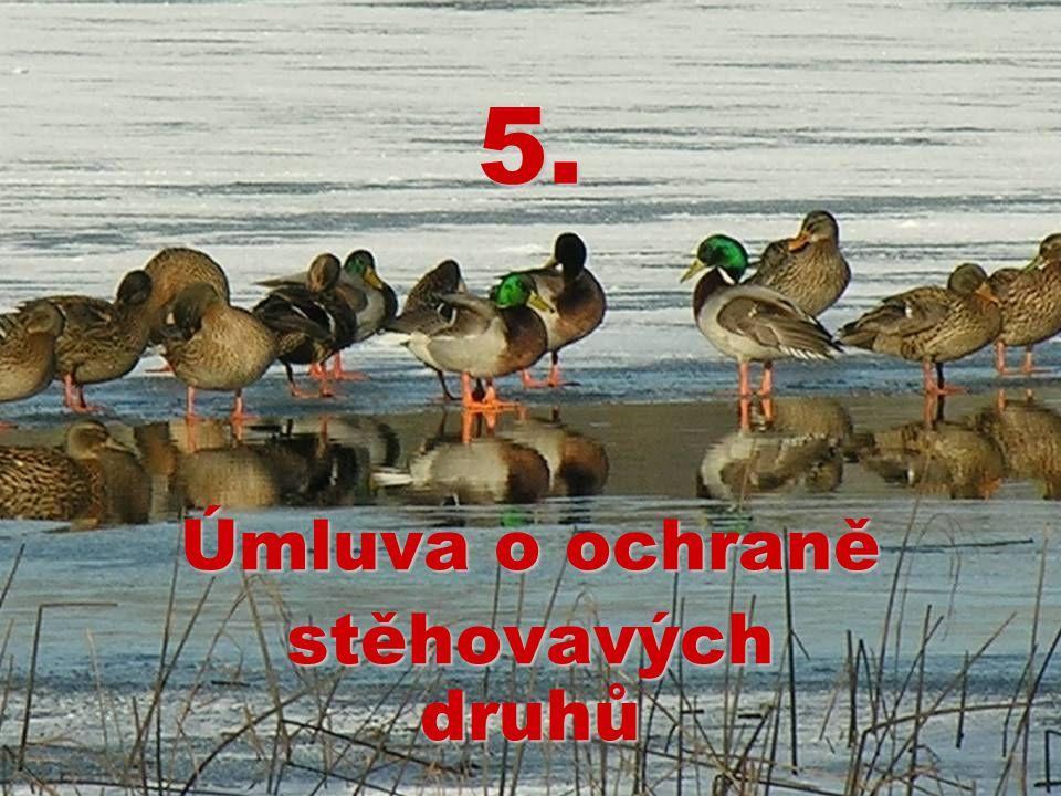 5. Úmluva o ochraně stěhovavých druhů
