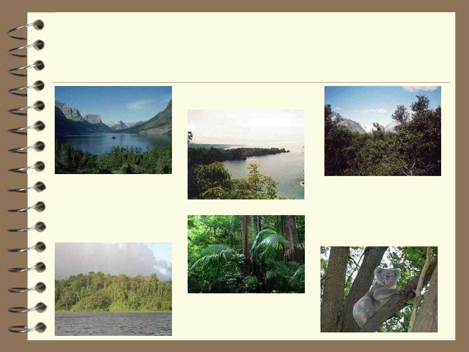 Význam lesa * Obohacuje vzduch kyslíkem a pohlcuje oxid uhličitý, usměrňuje pohyb vzduchu, zbavuje jej prašných částic, jedovatých škodlivin a také bakterií, ovlivňuje teplotu vzduchu.
