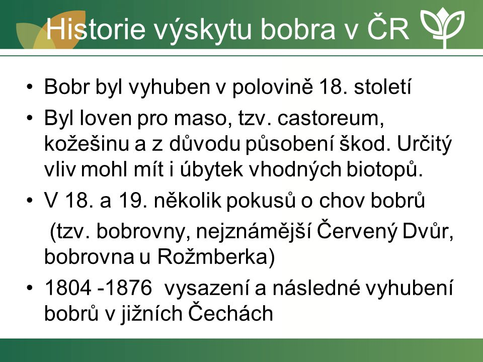 Historie výskytu bobra v ČR Bobr byl vyhuben v polovině 18. století Byl loven pro maso, tzv. castoreum, kožešinu a z důvodu působení škod. Určitý vliv