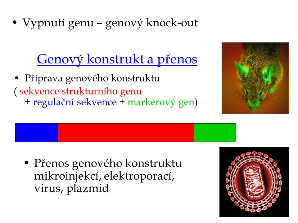 Bakterie a plazmidy Plazmid - je malá kruhová molekula DNA schopná autoreplikace Typy plazmidů: F-plazmidy (konjugace) R-plazmidy (rezistence) N – plazmidy (vázání vzdušného dusíku) Col – plazmid – tvorba kolicinů