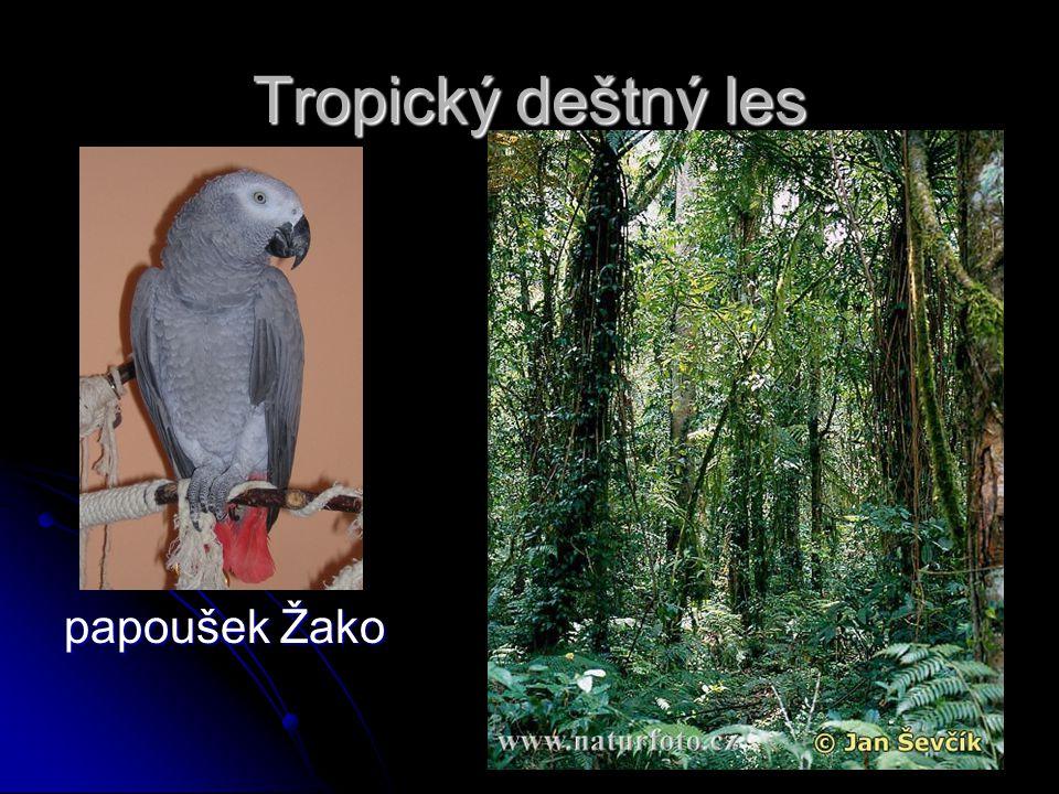Tropický deštný les papoušek Žako