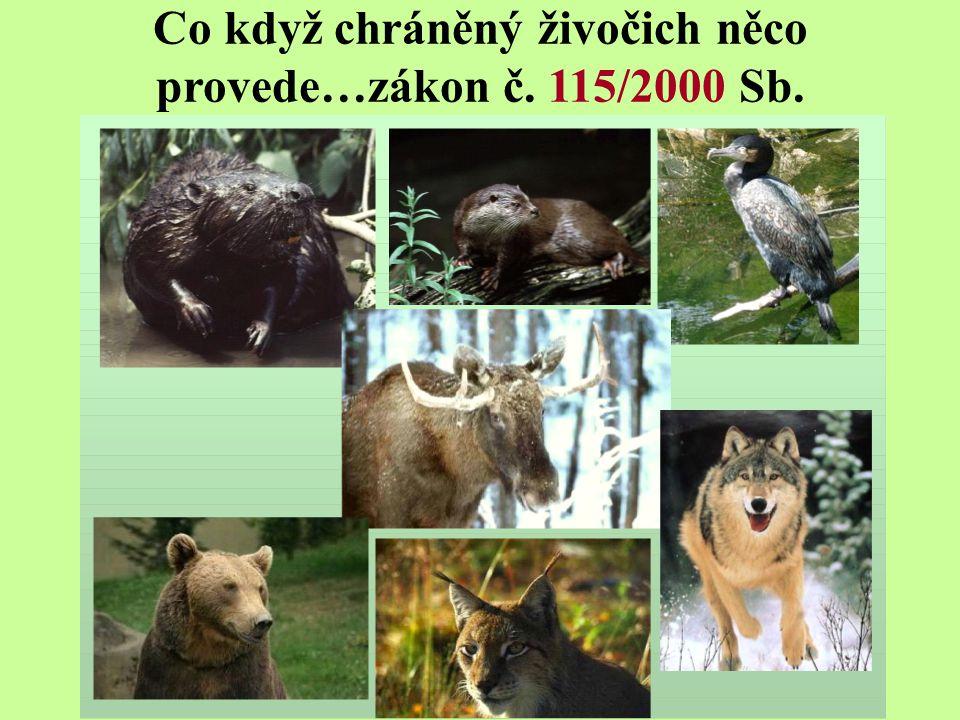 Co když chráněný živočich něco provede…zákon č. 115/2000 Sb.
