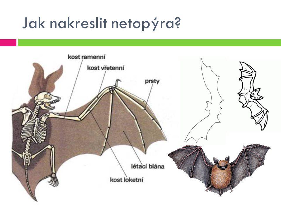 Jak nakreslit netopýra?