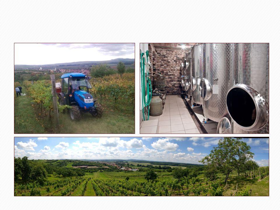  Z historie Nosislavi je zřejmé, že vinice se zde pěstovaly už před 600 léty (první písemná zmínka), ale i dříve.