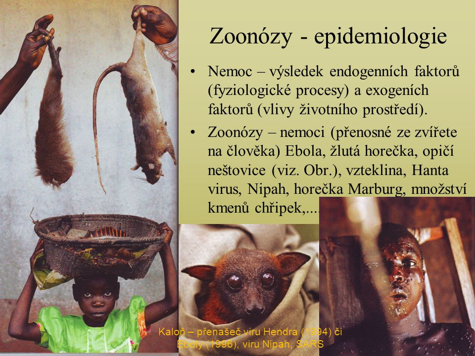 Zoonózy - epidemiologie Nemoc – výsledek endogenních faktorů (fyziologické procesy) a exogeních faktorů (vlivy životního prostředí).