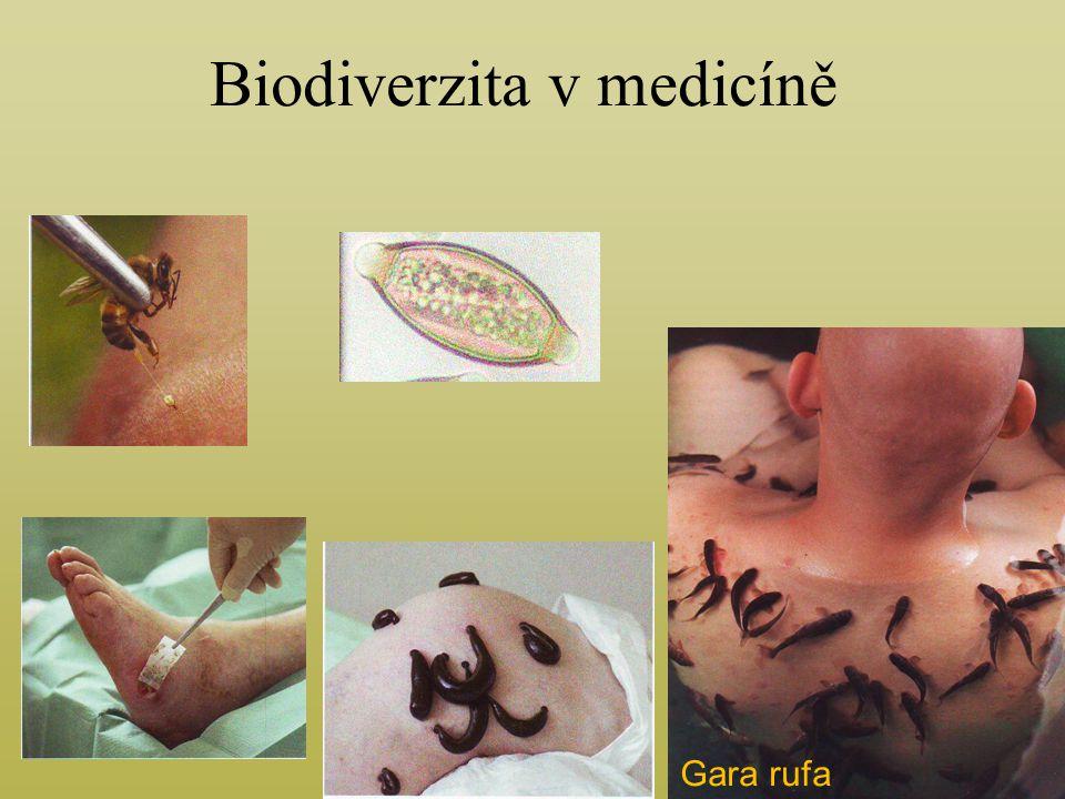Biodiverzita v medicíně Gara rufa