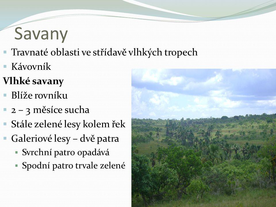 Savany  Travnaté oblasti ve střídavě vlhkých tropech  Kávovník Vlhké savany  Blíže rovníku  2 – 3 měsíce sucha  Stále zelené lesy kolem řek  Gal