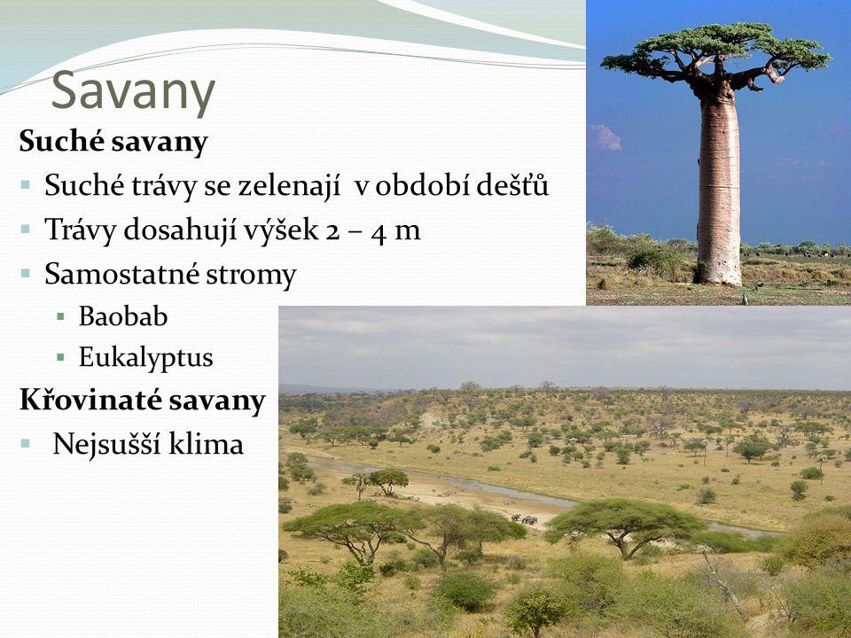 Savany Suché savany  Suché trávy se zelenají v období dešťů  Trávy dosahují výšek 2 – 4 m  Samostatné stromy  Baobab  Eukalyptus Křovinaté savany