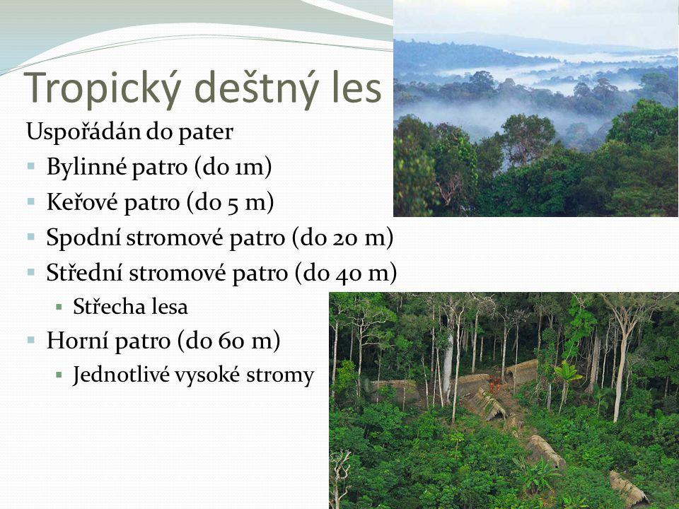 Tropický deštný les Uspořádán do pater  Bylinné patro (do 1m)  Keřové patro (do 5 m)  Spodní stromové patro (do 20 m)  Střední stromové patro (do