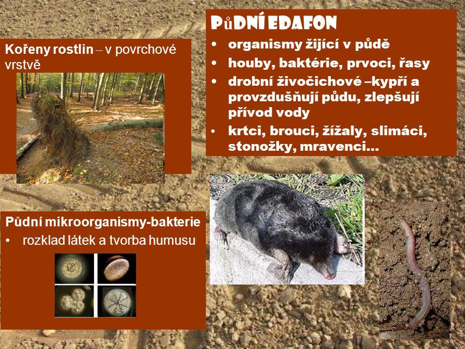 Kořeny rostlin – v povrchové vrstvě p ů dní edafon organismy žijící v půdě houby, baktérie, prvoci, řasy drobní živočichové –kypří a provzdušňují půdu