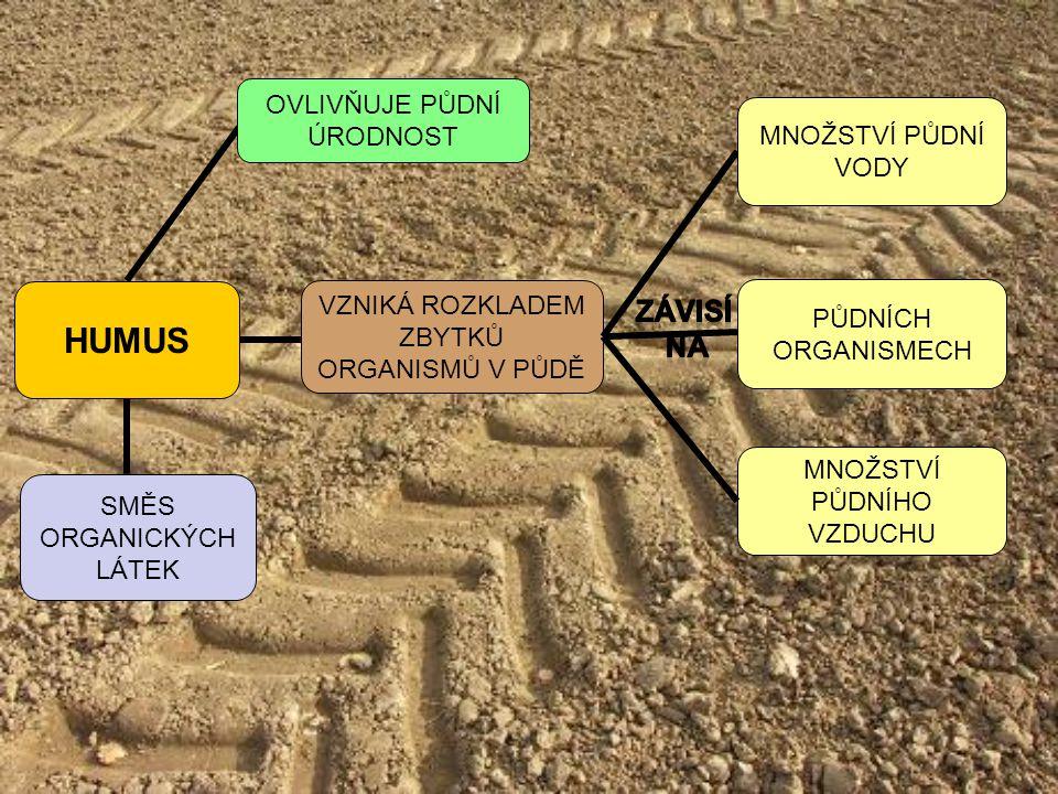 HUMUS VZNIKÁ ROZKLADEM ZBYTKŮ ORGANISMŮ V PŮDĚ PŮDNÍCH ORGANISMECH MNOŽSTVÍ PŮDNÍ VODY MNOŽSTVÍ PŮDNÍHO VZDUCHU SMĚS ORGANICKÝCH LÁTEK OVLIVŇUJE PŮDNÍ