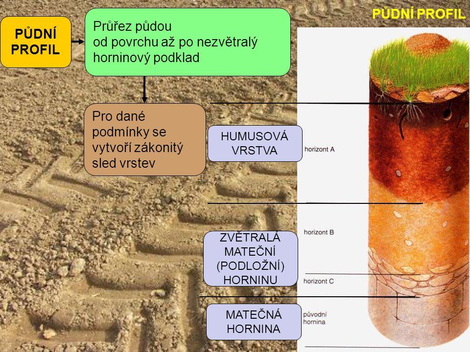 PŮDNÍ PROFIL Průřez půdou od povrchu až po nezvětralý horninový podklad Pro dané podmínky se vytvoří zákonitý sled vrstev HUMUSOVÁ VRSTVA MATEČNÁ HORN