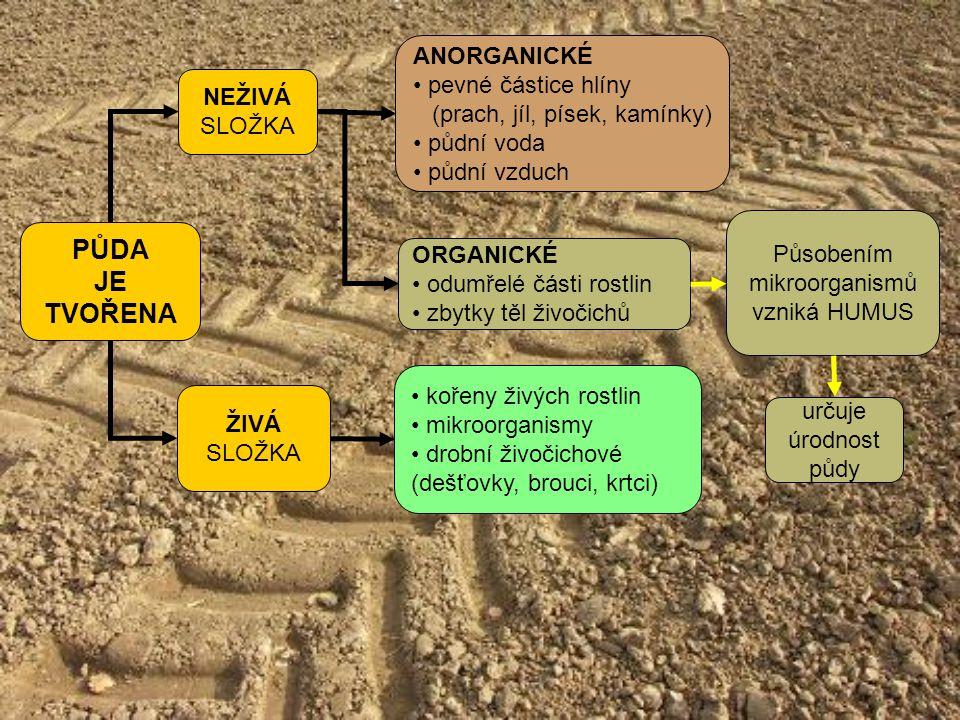 PŮDA JE TVOŘENA ŽIVÁ SLOŽKA NEŽIVÁ SLOŽKA ANORGANICKÉ pevné částice hlíny (prach, jíl, písek, kamínky) půdní voda půdní vzduch kořeny živých rostlin m