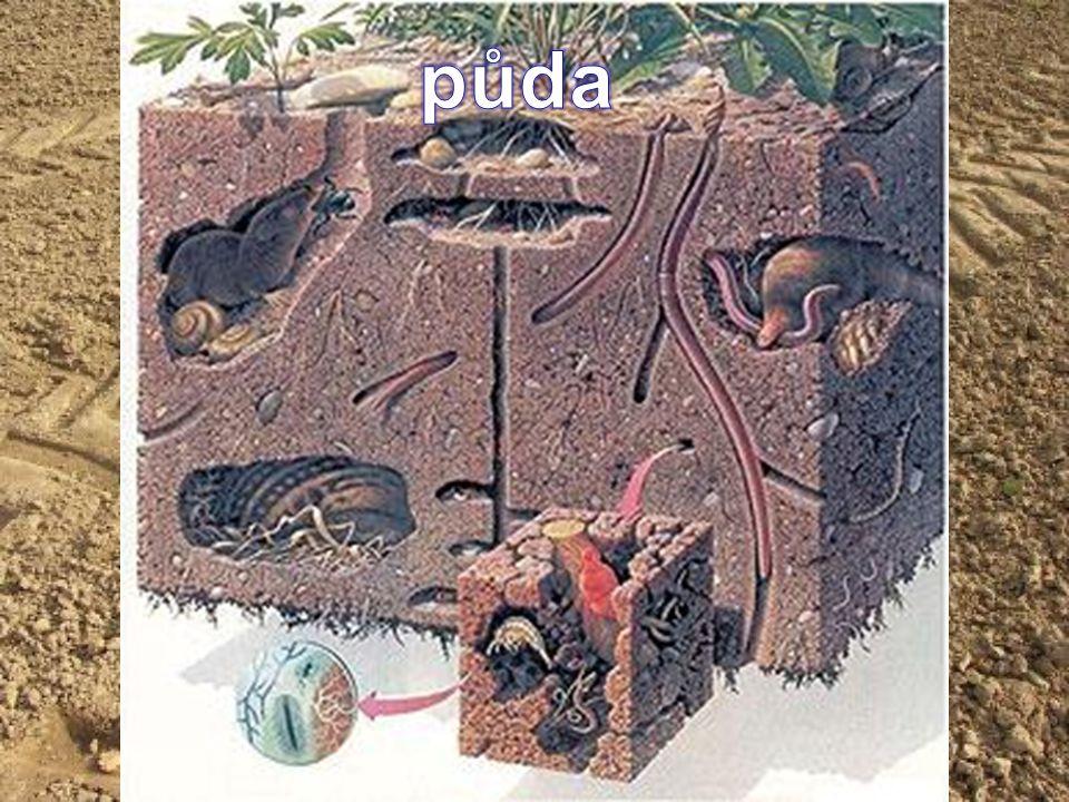 TYPY PŮD podle úrodnosti ČERNOZEMĚ HNĚDOZEMĚ HNĚDÉ PŮDY PODZOLOVÉ PŮDY Úrodnost je určena velikostí humusové vrstvy nížiny Silná vrstva humusu Černá barva nížiny pahorkatiny Slabá vrstva humusu Tenká vrstva humusu Pod ní šedá vrstva hory Méně humusu než černozemě