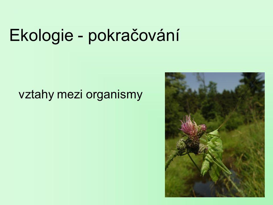 Ekologie - pokračování vztahy mezi organismy