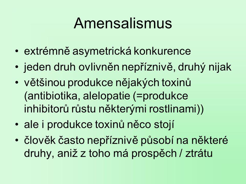 Amensalismus extrémně asymetrická konkurence jeden druh ovlivněn nepříznivě, druhý nijak většinou produkce nějakých toxinů (antibiotika, alelopatie (=produkce inhibitorů růstu některými rostlinami)) ale i produkce toxinů něco stojí člověk často nepříznivě působí na některé druhy, aniž z toho má prospěch / ztrátu