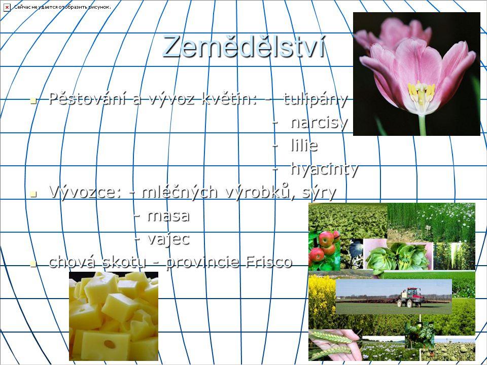 Zemědělství Pěstování a vývoz květin: - tulipány Pěstování a vývoz květin: - tulipány - narcisy - narcisy - lilie - lilie - hyacinty - hyacinty Vývozc
