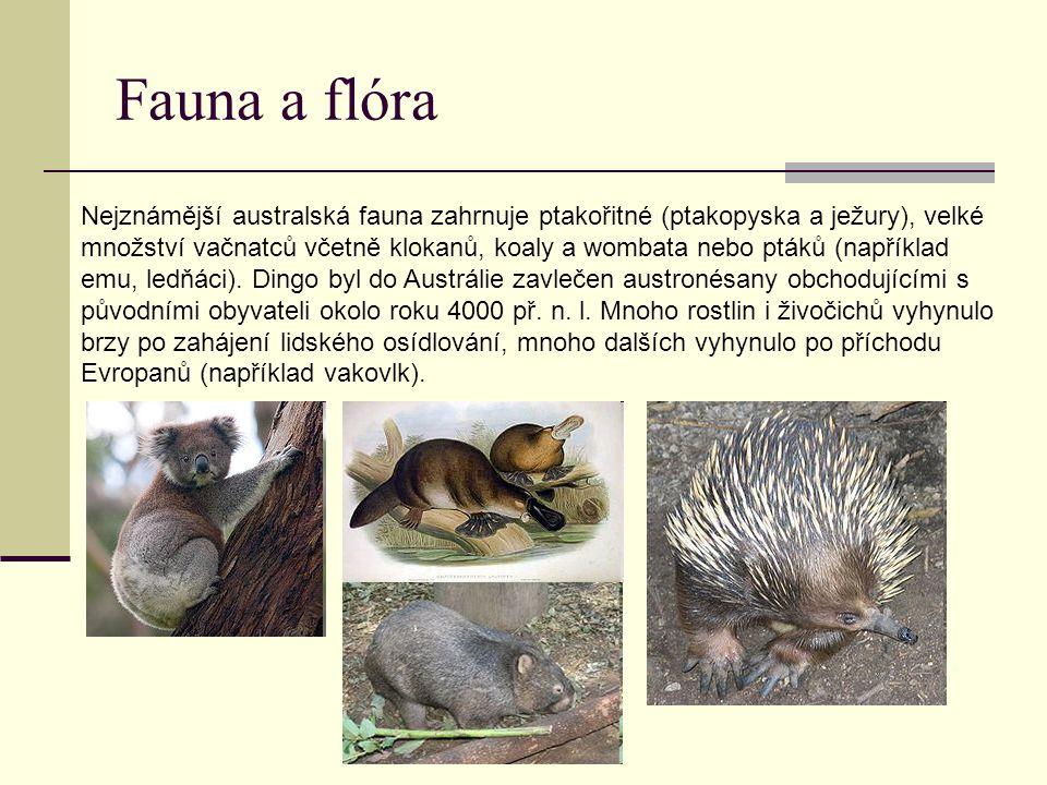 Fauna a flóra Nejznámější australská fauna zahrnuje ptakořitné (ptakopyska a ježury), velké množství vačnatců včetně klokanů, koaly a wombata nebo ptá