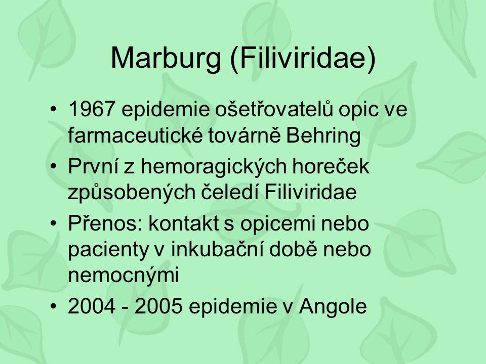 Marburg (Filiviridae) 1967 epidemie ošetřovatelů opic ve farmaceutické továrně Behring První z hemoragických horeček způsobených čeledí Filiviridae Přenos: kontakt s opicemi nebo pacienty v inkubační době nebo nemocnými 2004 - 2005 epidemie v Angole