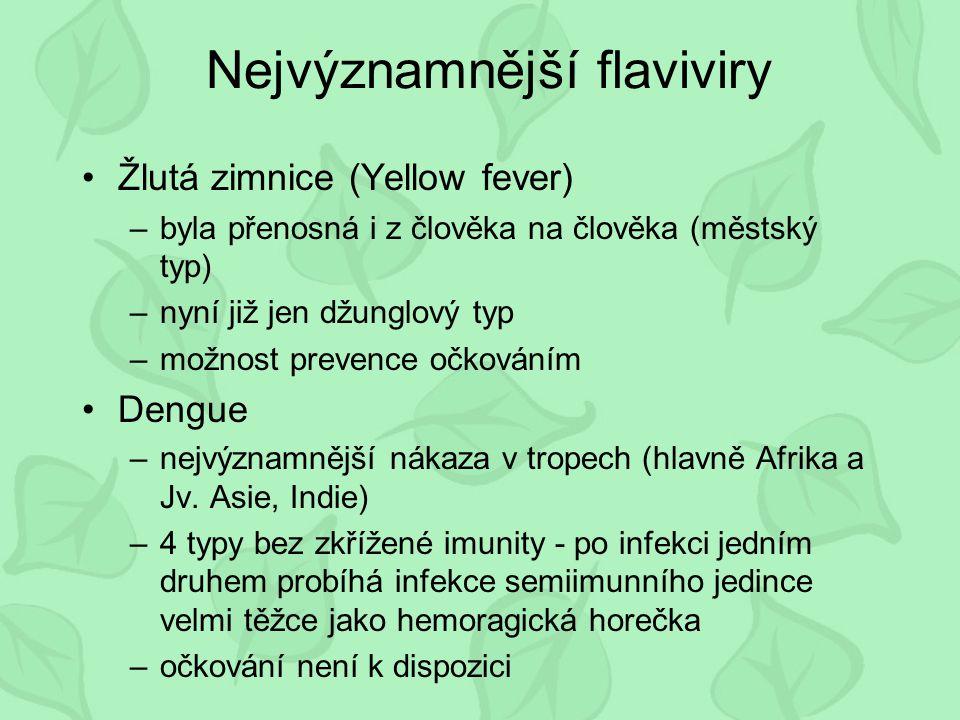Nejvýznamnější flaviviry Žlutá zimnice (Yellow fever) –byla přenosná i z člověka na člověka (městský typ) –nyní již jen džunglový typ –možnost prevence očkováním Dengue –nejvýznamnější nákaza v tropech (hlavně Afrika a Jv.