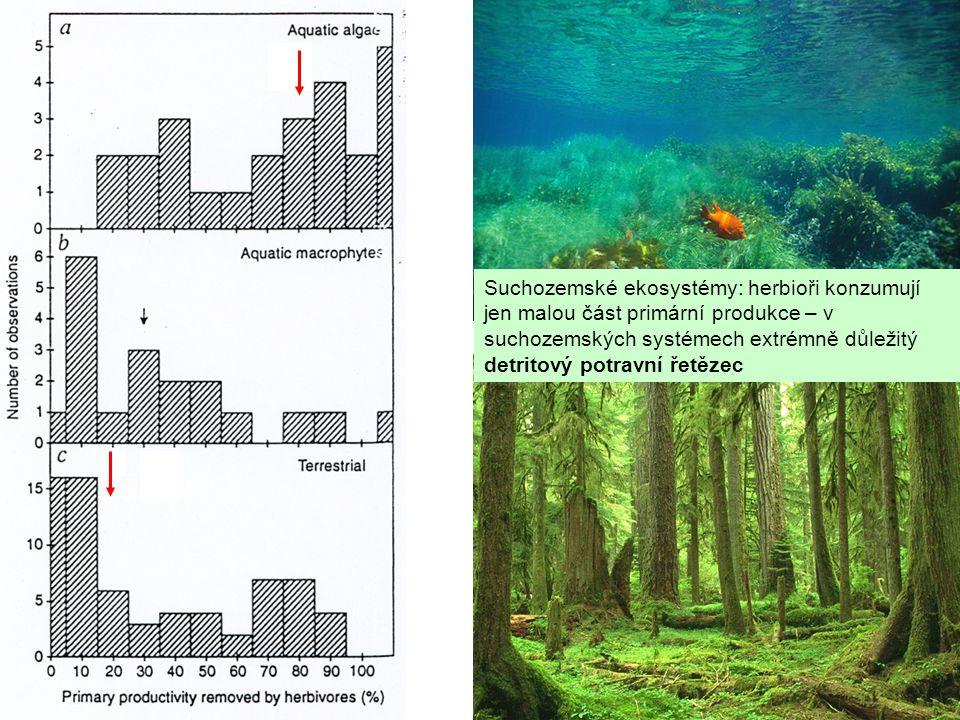 Suchozemské ekosystémy: herbioři konzumují jen malou část primární produkce – v suchozemských systémech extrémně důležitý detritový potravní řetězec