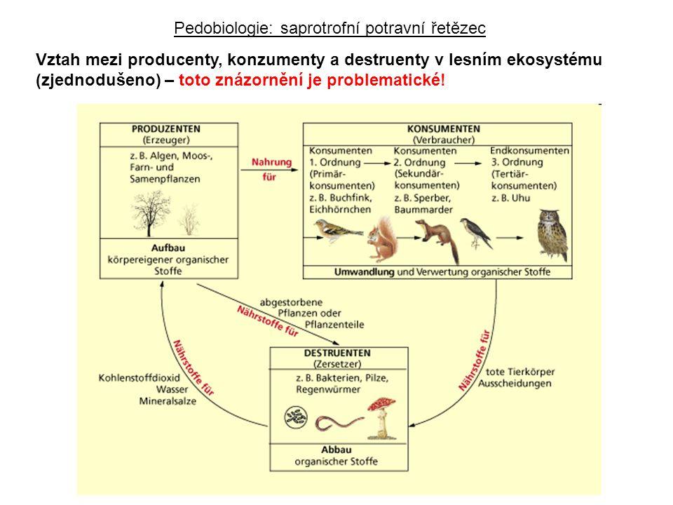 Vztah mezi producenty, konzumenty a destruenty v lesním ekosystému (zjednodušeno) – toto znázornění je problematické.