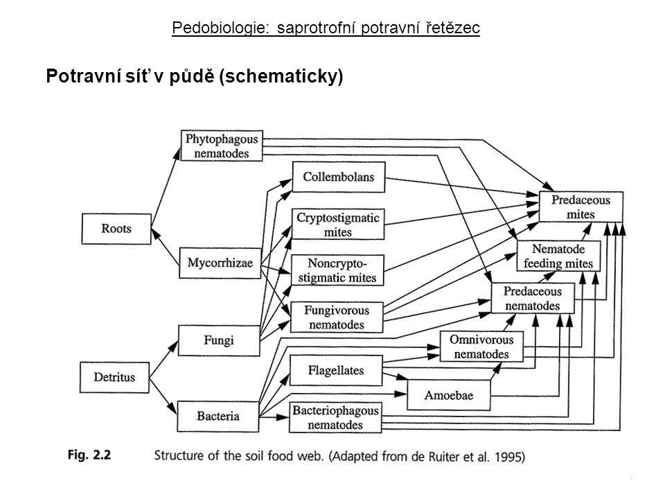 Potravní síť v půdě (schematicky) Pedobiologie: saprotrofní potravní řetězec