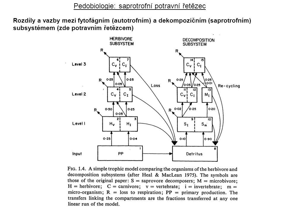 Rozdíly a vazby mezi fytofágním (autotrofním) a dekompozičním (saprotrofním) subsystémem (zde potravním řetězcem) Pedobiologie: saprotrofní potravní ř