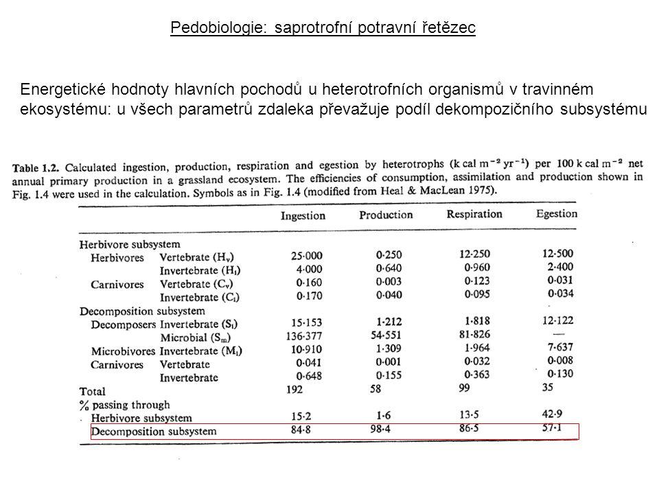 Energetické hodnoty hlavních pochodů u heterotrofních organismů v travinném ekosystému: u všech parametrů zdaleka převažuje podíl dekompozičního subsystému Pedobiologie: saprotrofní potravní řetězec