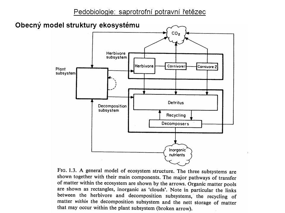 Obecný model struktury ekosystému Pedobiologie: saprotrofní potravní řetězec